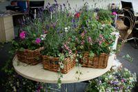 Mill Flowers