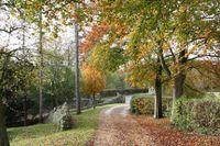Autumn_w