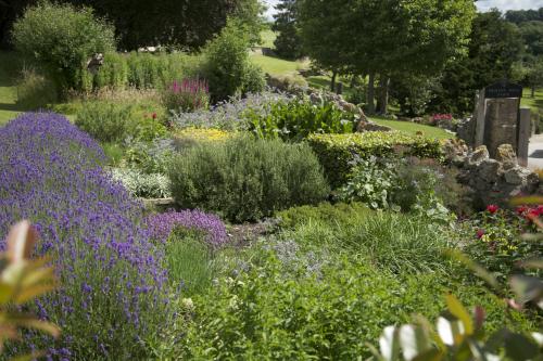 Herb Garden July 16