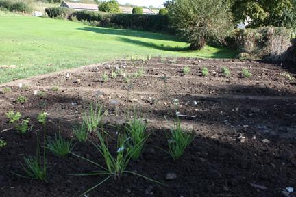 Herb Garden Oct 08