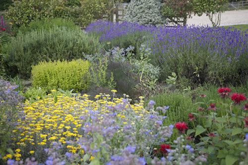 Herb Garden 16