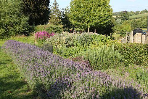 Herb Garden Aug 15