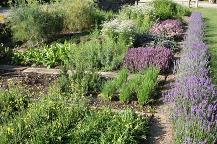 Herbs July09